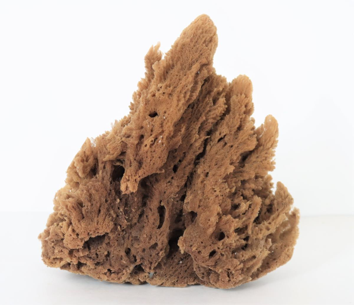 Large Natural Sea Sponge - Image 2 of 4
