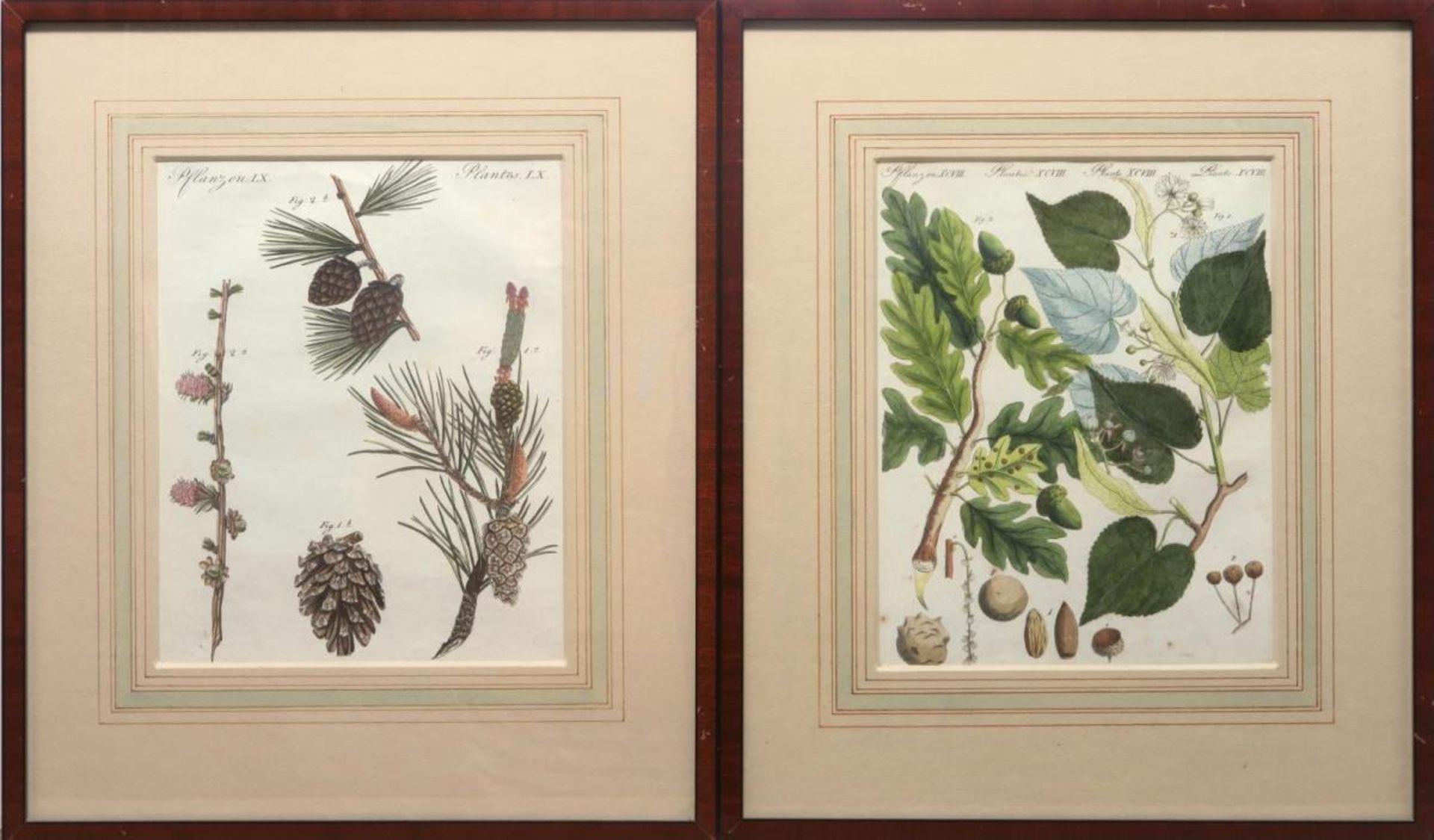 """6 Blätter """"Pflanzen"""" aus: Bilderbuch für Kinder - Bild 3 aus 4"""