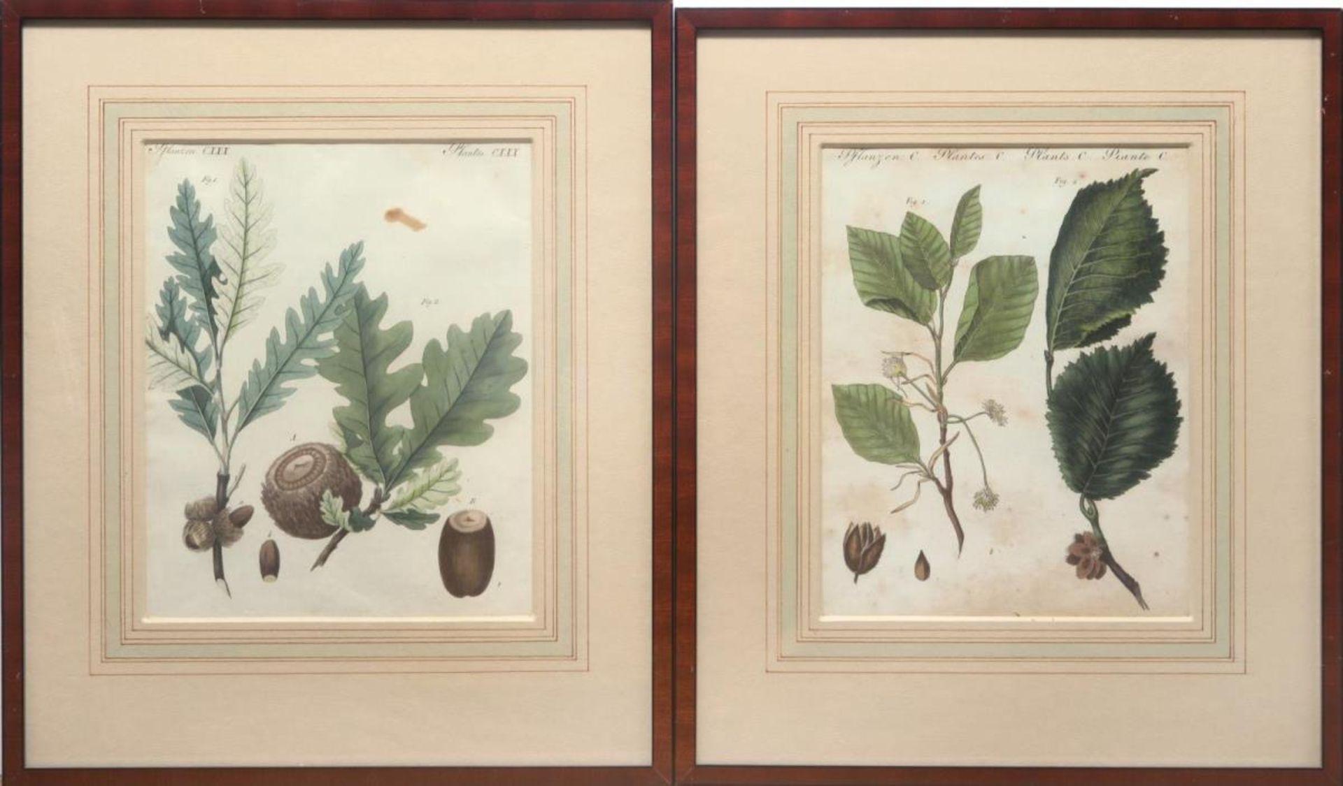 """6 Blätter """"Pflanzen"""" aus: Bilderbuch für Kinder - Bild 2 aus 4"""