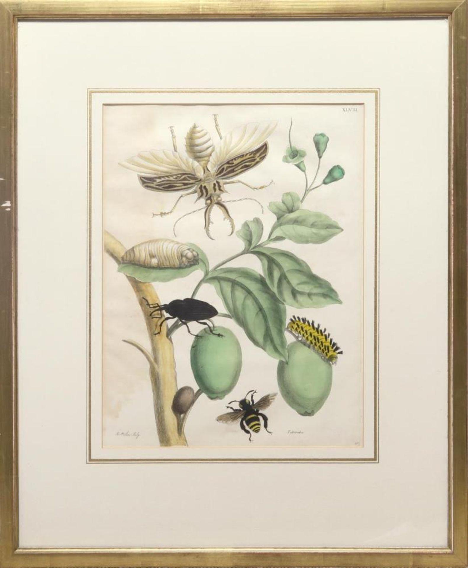 Tabrouba - verschiedene Insekten