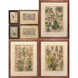 Pflanzen, Karten u.a