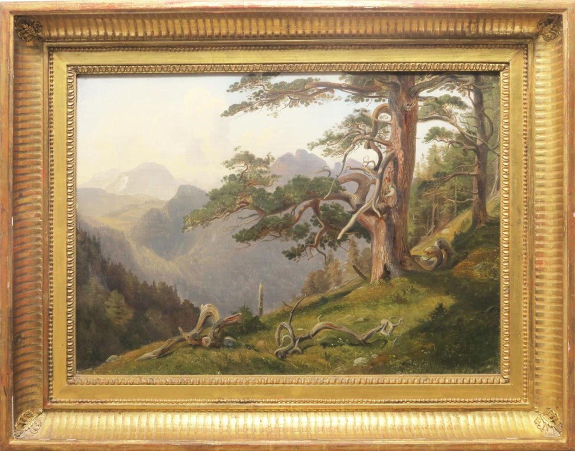 Kiefer im Gebirge
