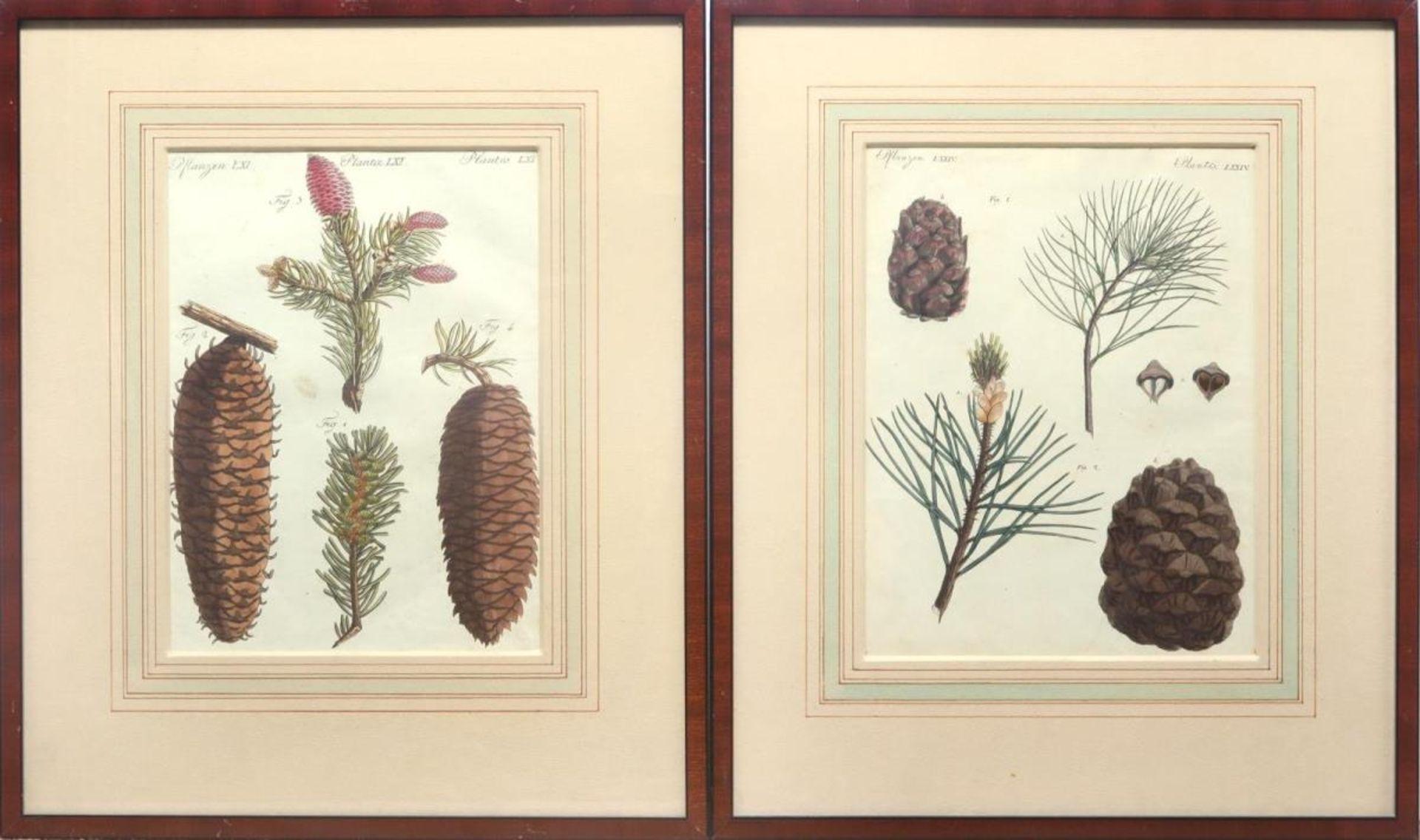 """6 Blätter """"Pflanzen"""" aus: Bilderbuch für Kinder - Bild 4 aus 4"""