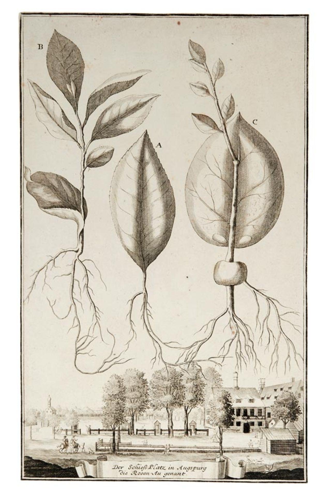 Volkamer, Johann Christoph