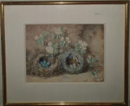Attributed to Oliver Clare. A Watercolour Still life of eggs in nest with blossom. No apparent