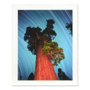 "Robert Sheer, ""General Grant Giant Sequoia"" Limited Edition Single Exposure Phot"