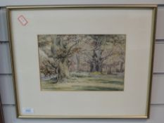 A watercolour, Ancient Oaks, woodland landscape, 17 x 25cm, framed and glazed