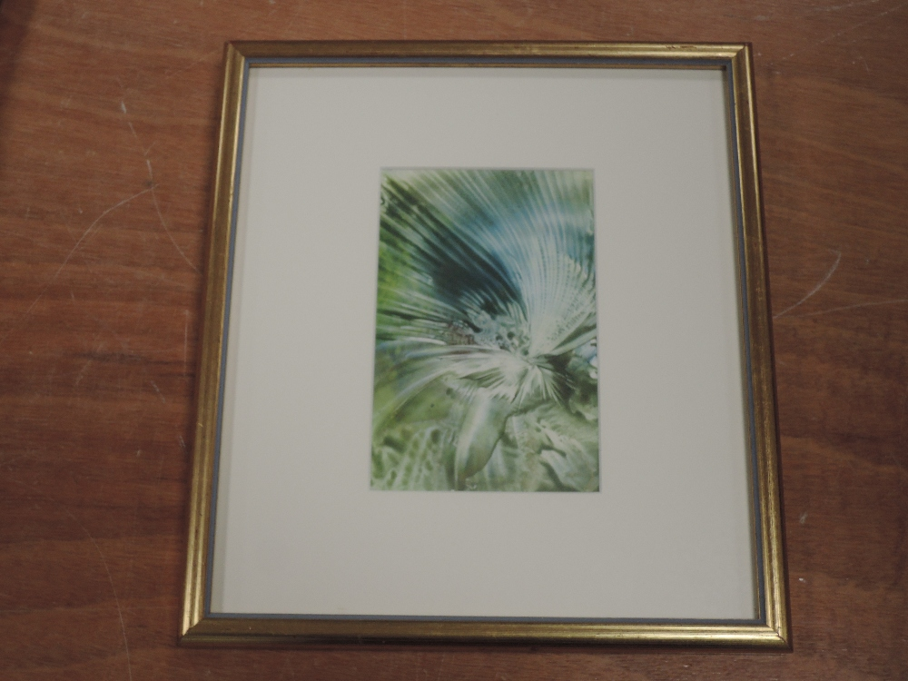 A wax picture, Tiana Marie, Wings, attributed verso and dated 1994, 15 x 10cm, framed and glazed