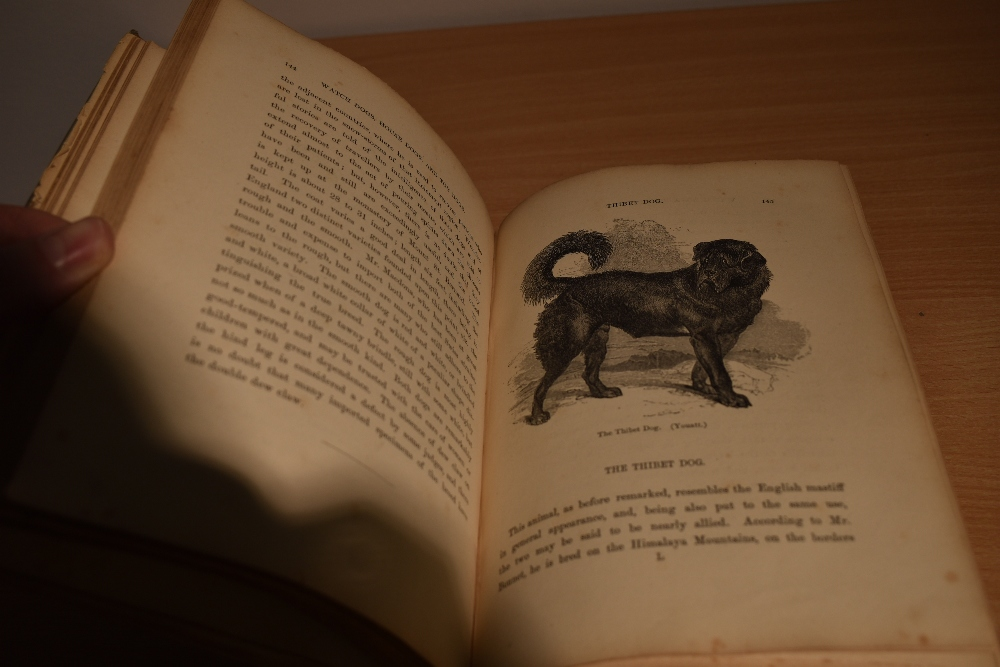 Natural History/Veterinary Science. Stonehenge - The Dog in Health and Disease. London: 1872, second - Image 4 of 4