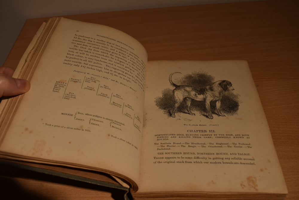 Natural History/Veterinary Science. Stonehenge - The Dog in Health and Disease. London: 1872, second - Image 3 of 4