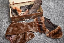 A leather suitcase containing a selection of furs including stoles and collars.