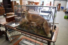 A taxidermy fox, mounted on naturalistic base in glass case (some repair to case), dimensions approx