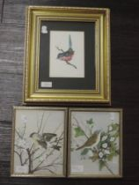 A watercolour, G, Dartford warbler, indistinctly signed, 16 x 12cm, anda pair of watercolours, D