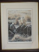 A Ltd Ed print, after Steven Townsend, barn owl, signed and num 312/450, 40 x 30cm, plus frame and