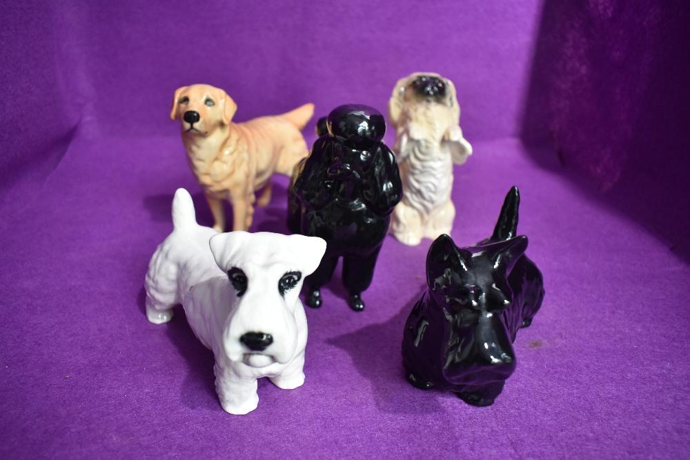 Five large Beswick dog figure studies, Pekinese 2982, Sealyham 971, Scottie 2037, Poodle 2339 and