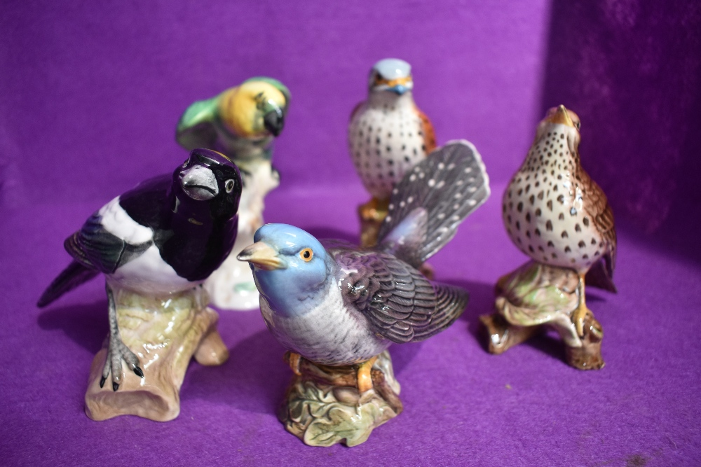 Five Beswick figure studies of birds, Parakeet 930, Song thrush 2308, Cuckoo 2315, Magpie 2305 and