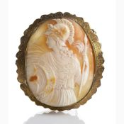 Shell carved cameo