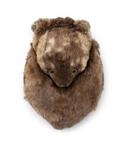 A SCOTTISH OTTER FUR SPORRAN, c.19th, the brown fur body with otter head flap. Size opened out