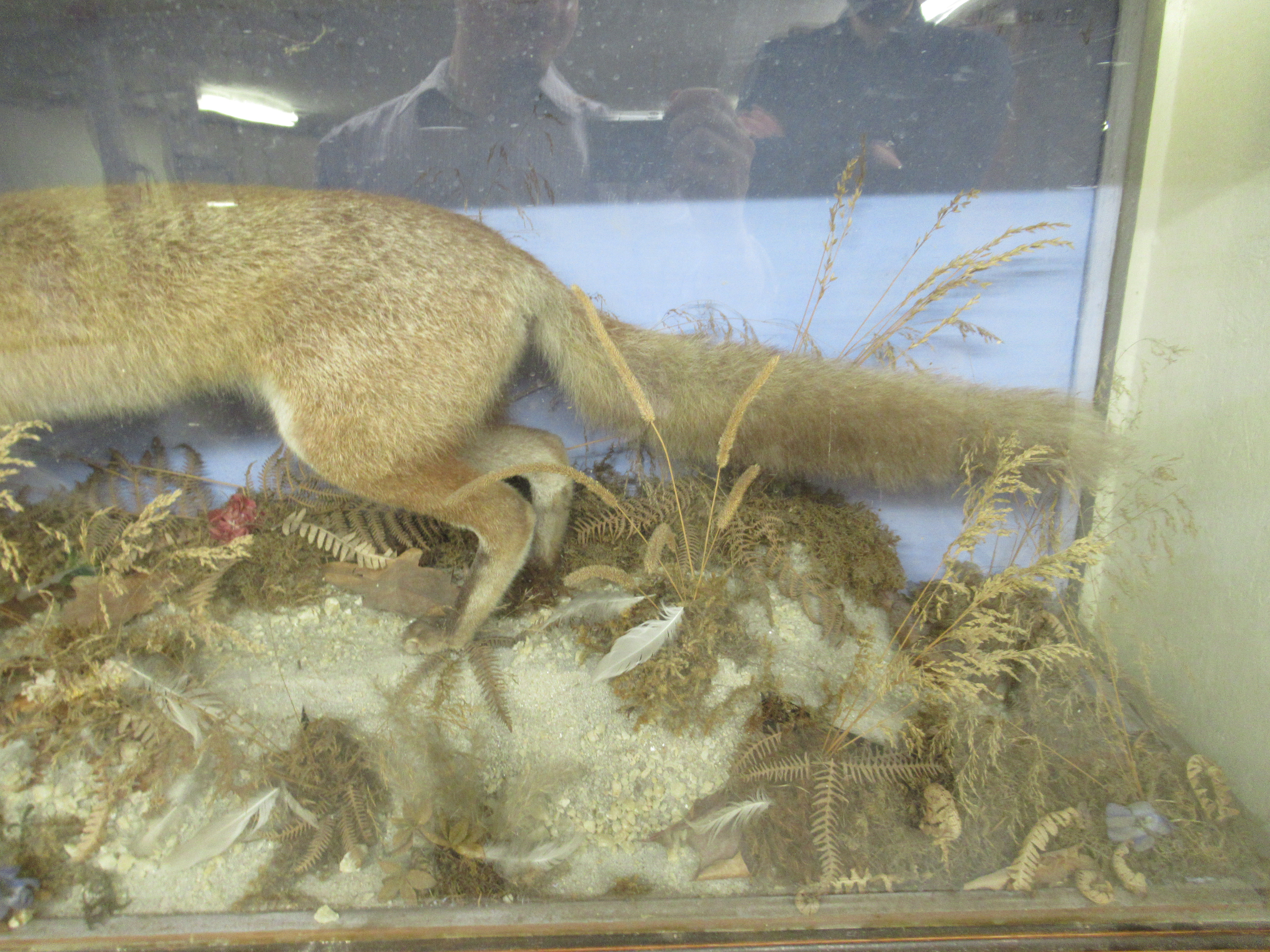 Taxidermy - a late 19th/early 20thC fox with captured prey, displayed in a naturalistic setting - Image 3 of 5