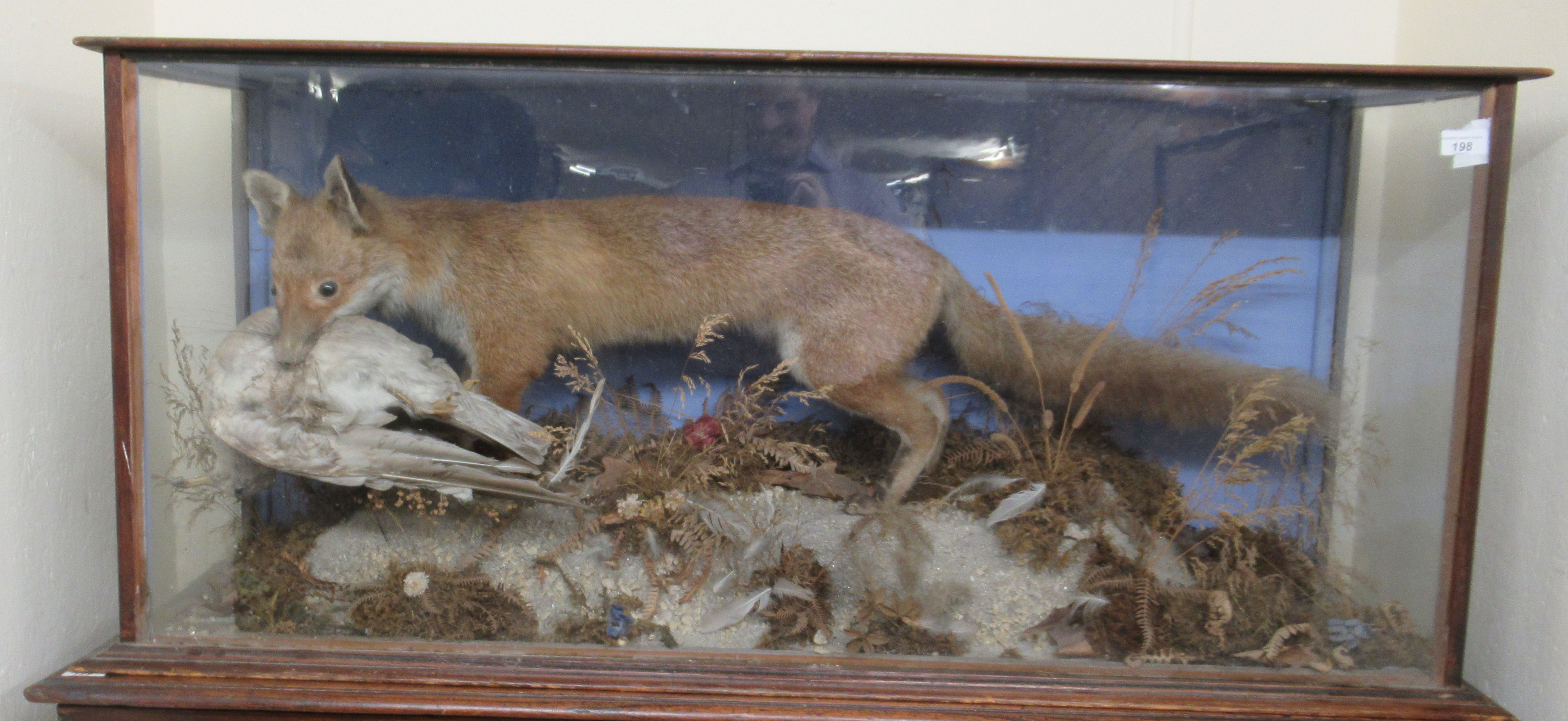 Taxidermy - a late 19th/early 20thC fox with captured prey, displayed in a naturalistic setting