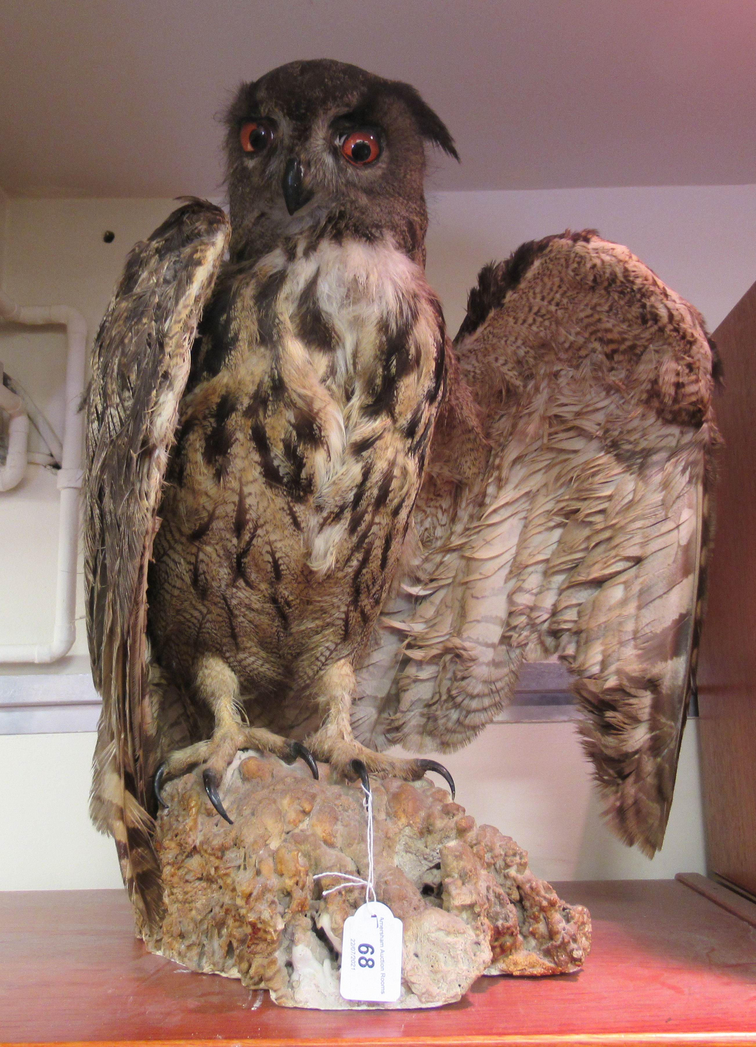 """Taxidermy: a late Victorian Long Eared Owl, on a naturalistic rock plinth 18""""h overall"""