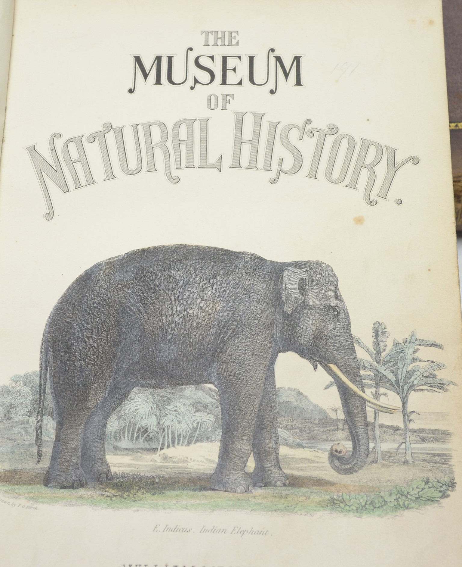 Mackenzie William) The Museum of Natural History. - Image 2 of 3
