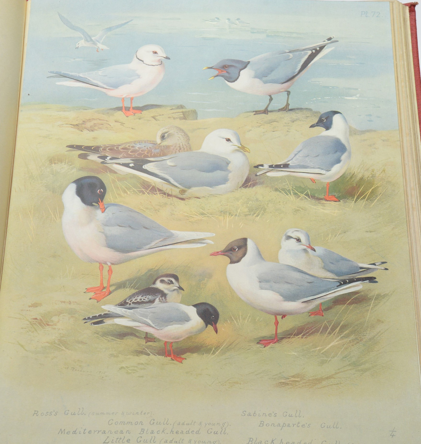 Thorburn (Archibald) British Birds. - Image 2 of 3