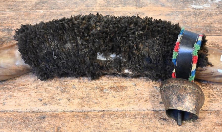 Pair of large bull/longhorn horns, 213 cm - Image 3 of 3