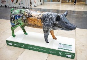 Heritage Hog - Students from BCoT