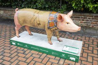 Tommy the Hog - Catherine Knighton