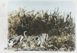 LITHOGRAPH BY CARLO GUARIENTI