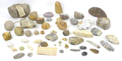 A collection of various archaeological and geological finds, including a piece from a Roman rotary