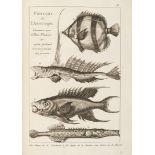 Dezallier d'Argenville, Antoine Joseph L'histoire naturelle eclaircie dans une de ses parties princi