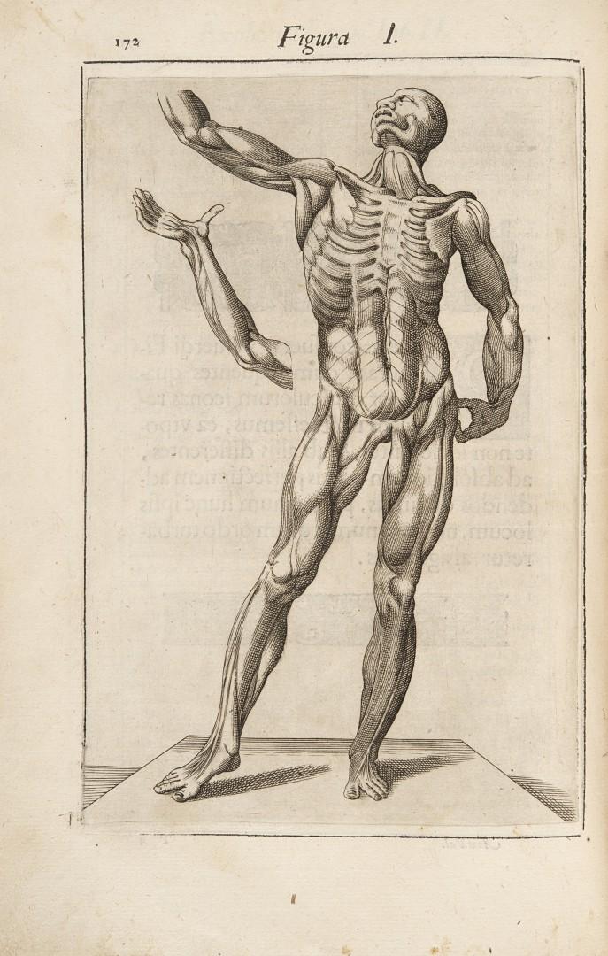Valverde, Juan de Anatome corporis humani.