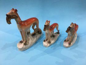 Three Staffordshire greyhounds