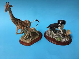 Two Border Fine Arts figures; spaniels and giraffes
