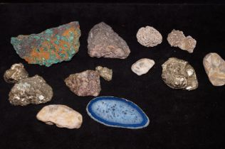 Collection of fossilised rocks