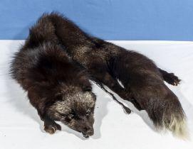 A silver fox fur stole
