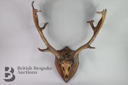 Set of Antlers