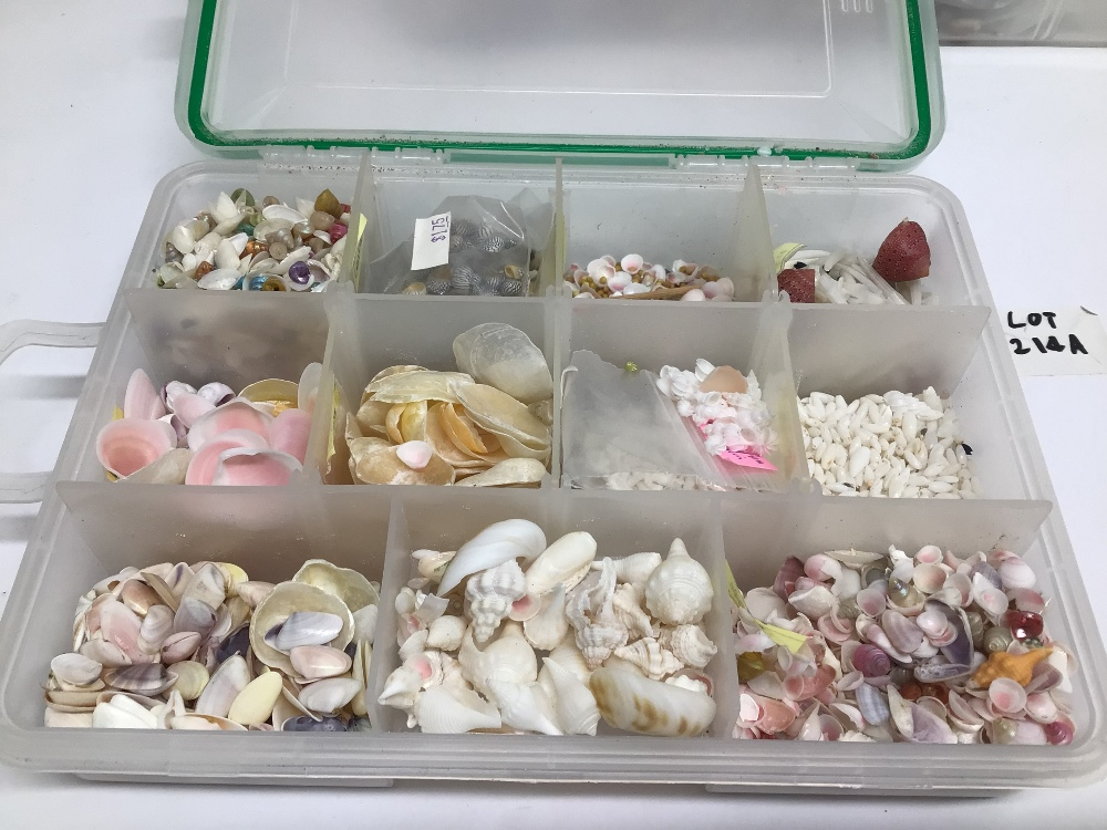 """A LARGE COLLECTION OF MIXED MICRO SEASHELLS WITH """"HOW TO"""" ARTS AND CRAFTS MANUAL / INSTRUCTIONS - Image 4 of 7"""