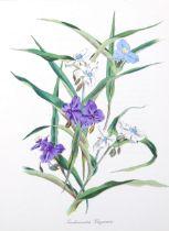 John Nash (1893 - 1977), colour lithograph, Tradescantia Virginica, 27cm x 20cm, mounted, from the
