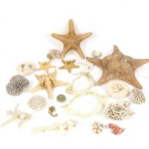 TAXIDERMY - various corals, starfish, shark's jaw, ostrich egg etc
