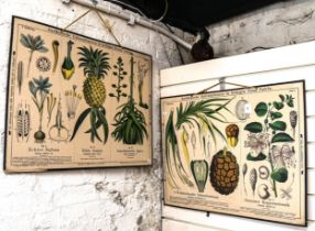 A pair of German natural history botanical classroom educational posters, by Friedrich Vieweg &