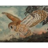 ANDREW J. WOODALL (MODERN) GOUACHE DRAWING Barn Owl about to land Unsigned, artist label verso 15? x