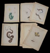 Eleven early 20th c. Japanese mostly entomological natural history paintings