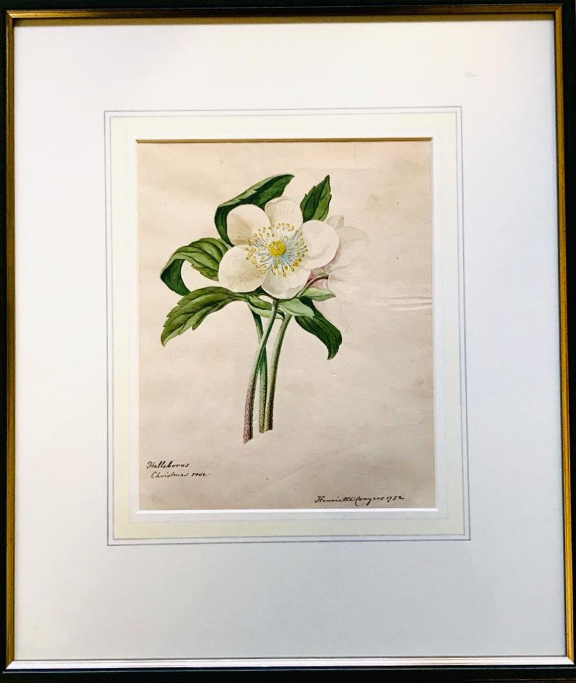 HENRIETTA CONGERS- 'HELLEBORUS CHRISTMAS ROSE', 1752, PRINT, SIGNED LOWER RIGHT, APPROXIMATELY 22