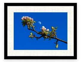 Philip Searle, award winning photographer. His work has appeared in national and international