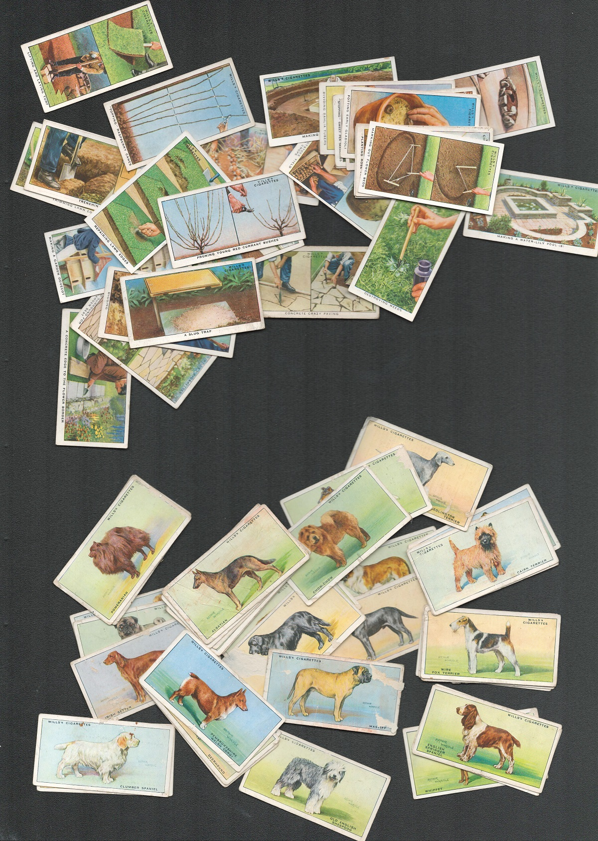 Cigarette card collection from WD and HO Wills. Part sets. Includes 1937 Dogs, 36 cards, 1938 garden - Image 2 of 2