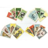 Cigarette card collection from The Molessime co ltd. 1964 130 dogs head and 11 dogs full length.