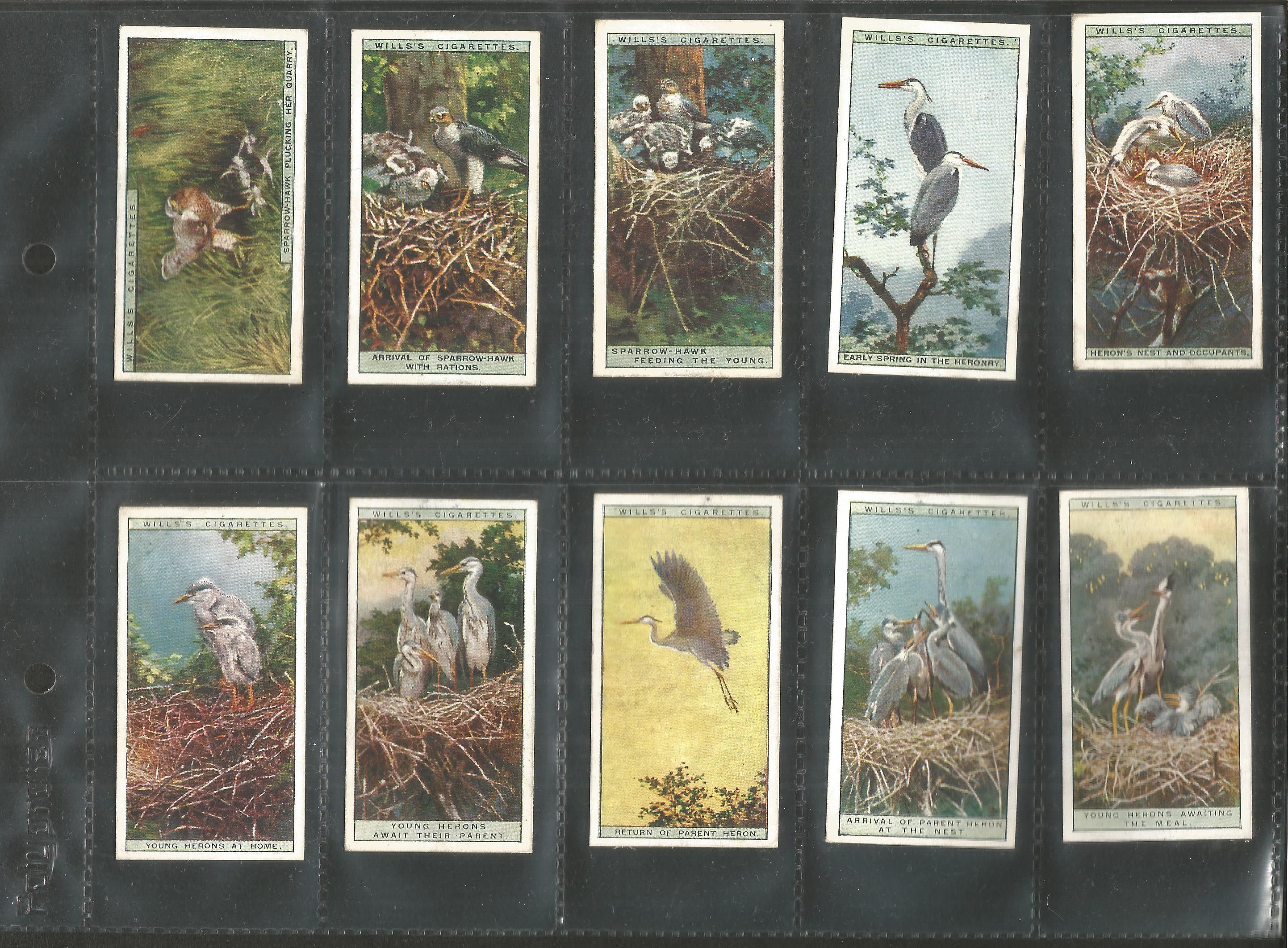 Cigarette card collection. 3 complete sets. Includes 1925 Flower culture in pots 50 cards, 1924 - Image 4 of 6